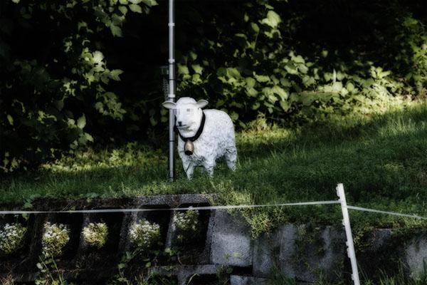 Foto Plastikschaf Dolly in freier Wildbahn